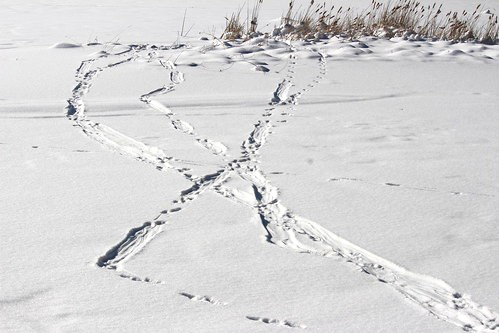 """Under the Snow"" is the topic for the Saturday morning, December 14, Little Explorers at Audubon Community Nature Center. Children ages three to eight and their favorite grownups are invited to learn about animals lives during the winter and how they adapt to the snow. Pictured is some of the landscape that could be explored."