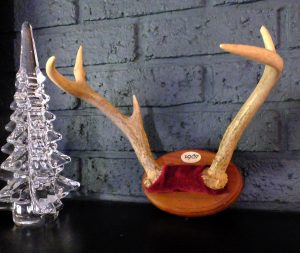 The author's first buck was a five-point whose antlers fell off when he was shot. Was it a trophy? You bet it was!