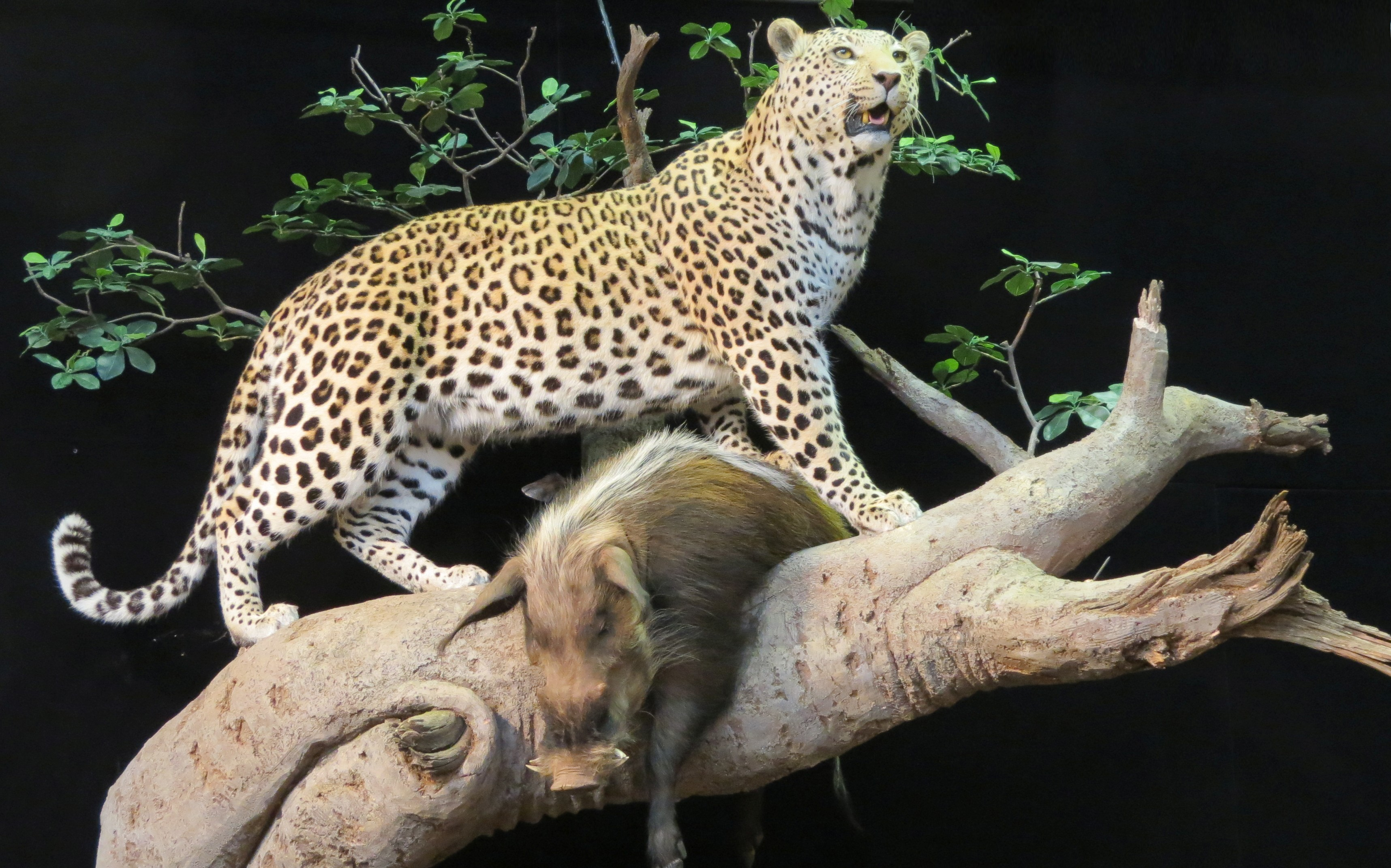 A sport show is a great place to view quality taxidermy. You can see some memorable exotic animals, and get ideas on how you'd like your next whitetail mounted.