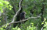 Turkey vultures are not one of nature's prettiest creatures, but they're well designed for what they do