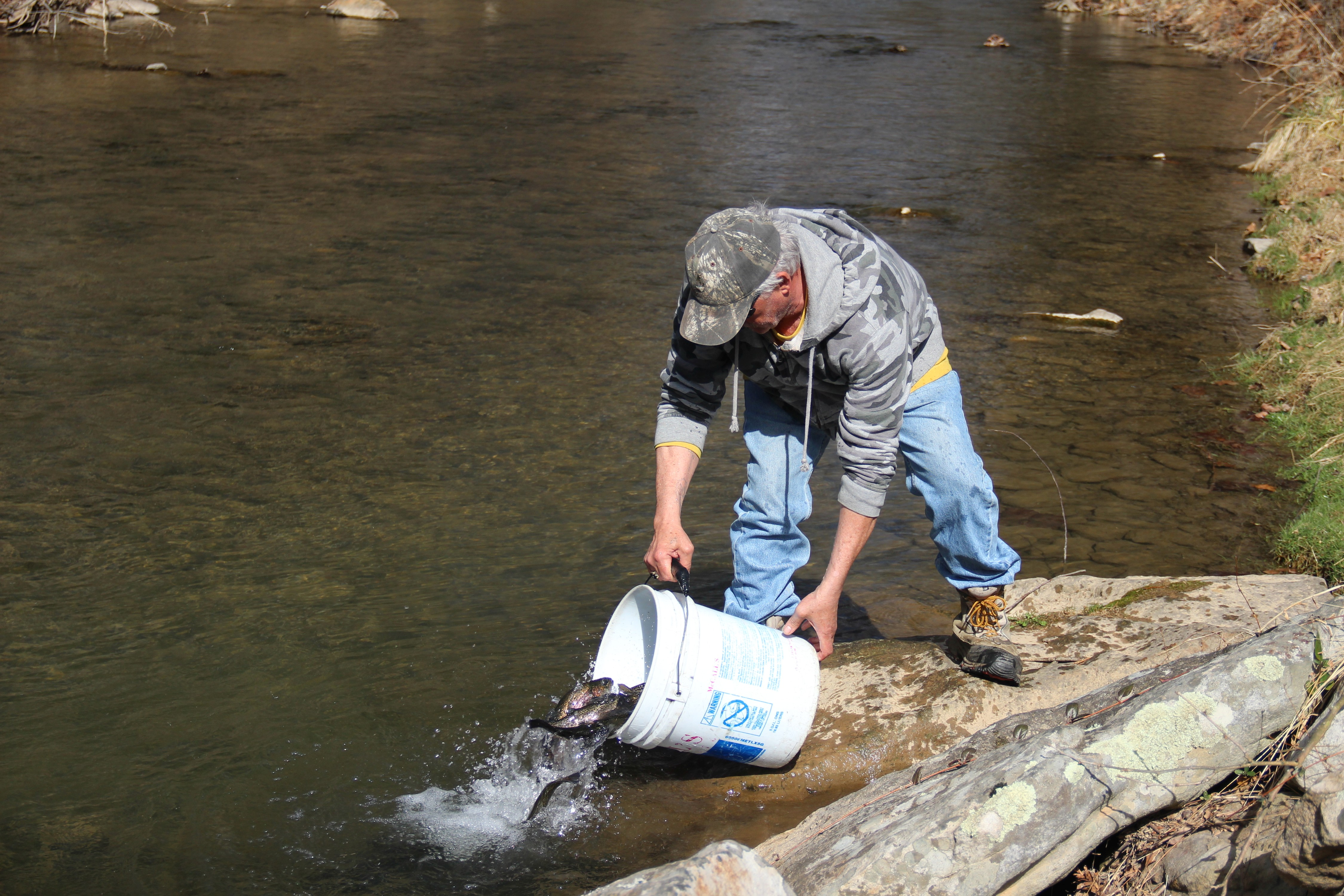 Volunteers are not participating in Pennsylvania's trout stocking this year, but trout season will open on schedule in NY and PA. (Photo courtesy of Pennsylvania Fish and Boat Commission.)