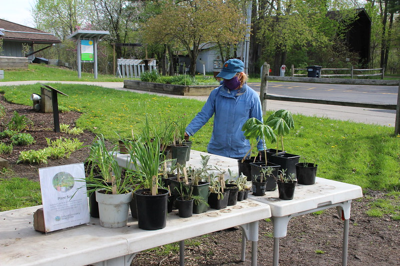 You can participate in a variation of Audubon Community Nature Center's annual Plant Exchange and Sale any time from dawn to dusk, now through Monday, June 1. You are invited to trade plants that are potted and labelled for other plants that are potted and labelled, or you can buy plants outright from the tables by the kiosk in front of the building.