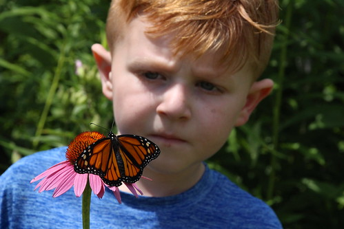 Audubon Community Nature Center is presenting four programs in August and September for anyone who would like to learn how to raise Monarch Butterflies. Three are for ages 9 and up, and one welcomes younger children.