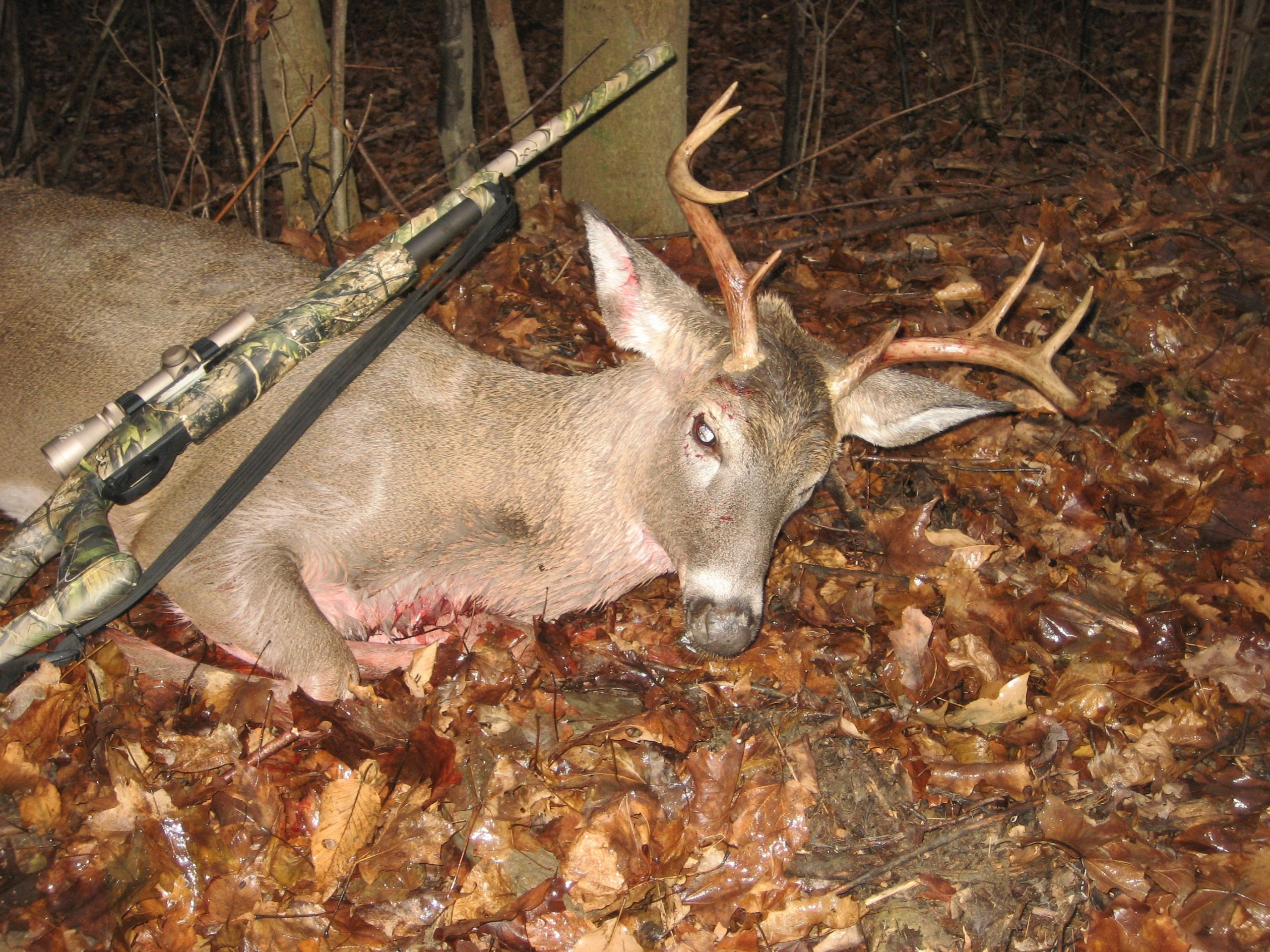 This New York buck was the result of an adjustable game plan.